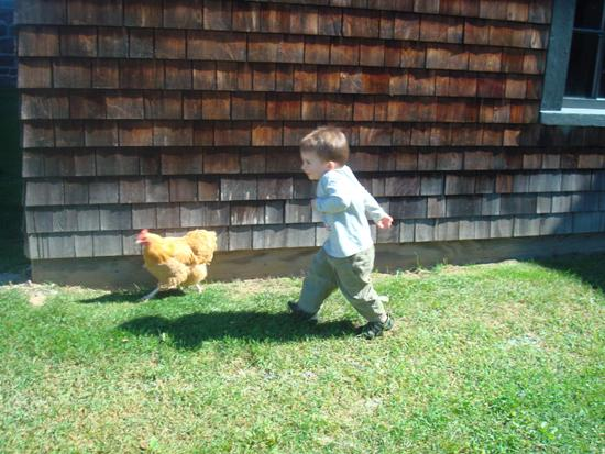 Sam chasing chicken re.JPG